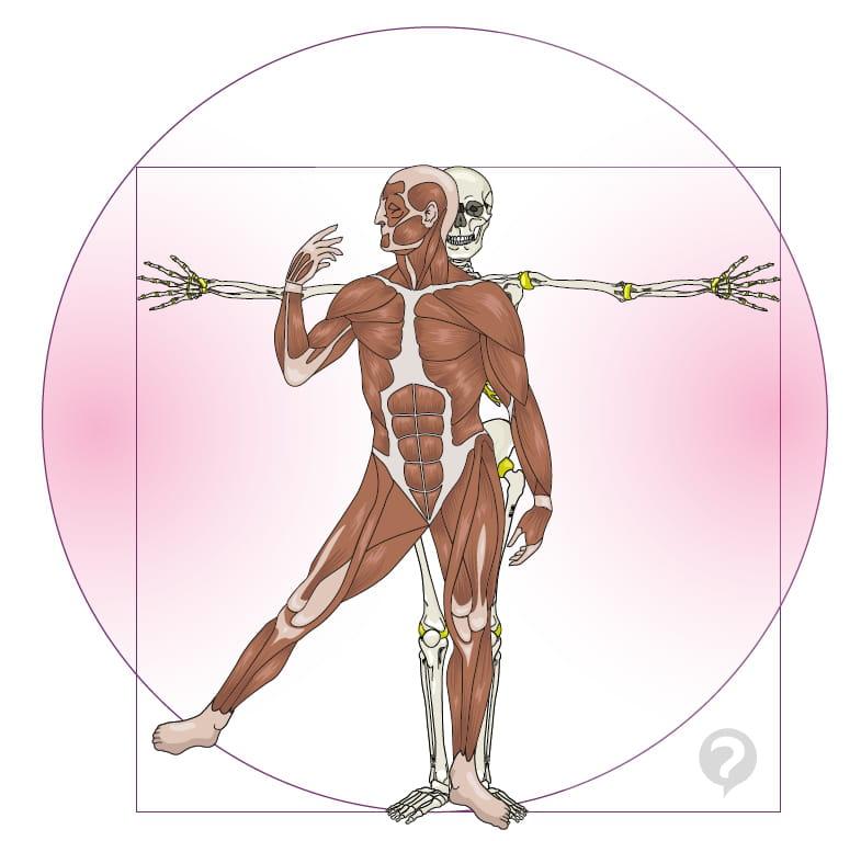 Anatomy - Definition