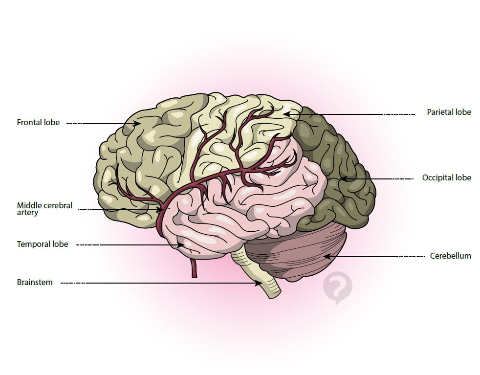 Middle cerebral artery - Definition