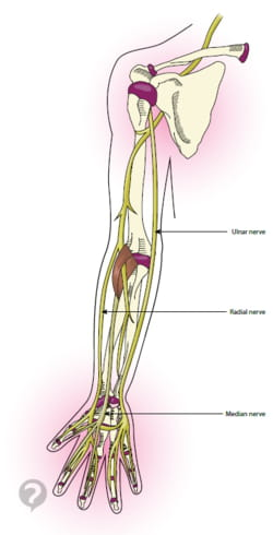 Ulnar Nerve Definition