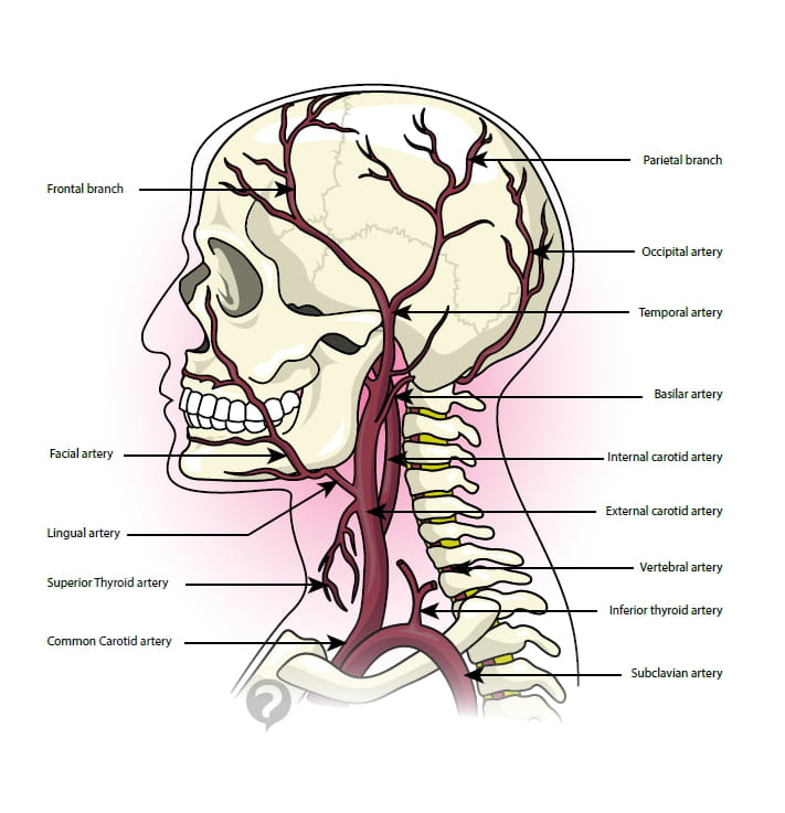 Temporal artery - Definition