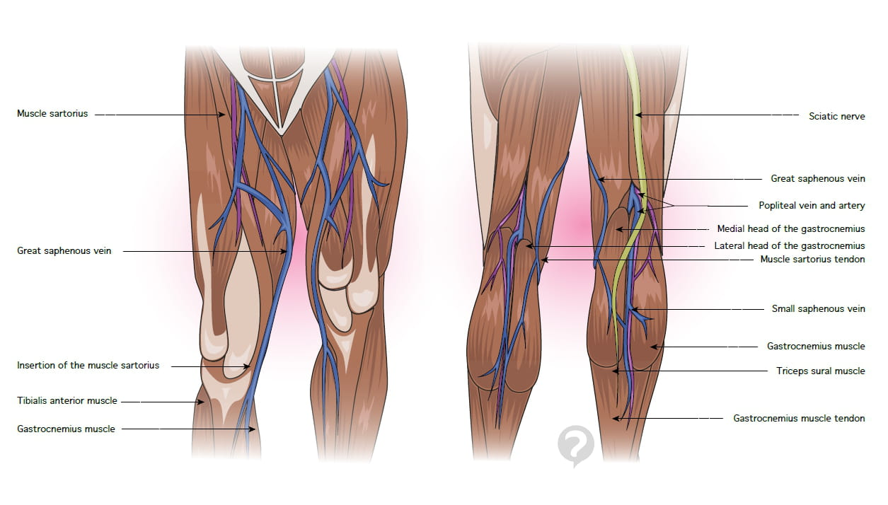 Anterior tibial muscle